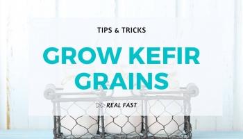 Tip to Grow Kefir Grains