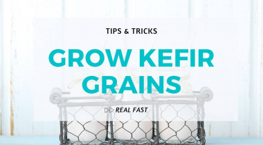 Tip to Grow Kefir Grains