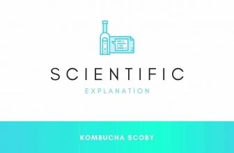 Scientific View of Kombucha